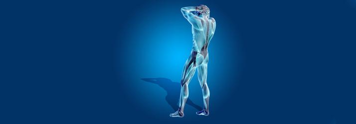 Chiropractic Flossmoor IL Structure